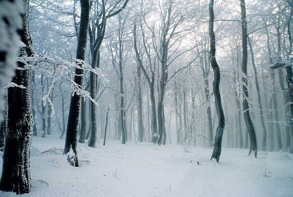 snowy_nite1